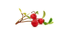 Клюквы ягоды Стоковые Изображения
