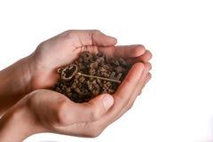 Ключ в почве пригорошни Стоковое Фото