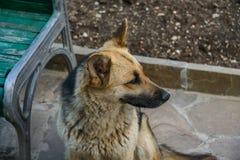 ключ изображения собаки высокий сиротливый Стоковая Фотография RF