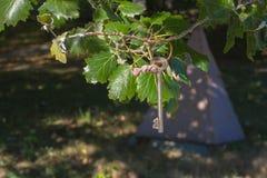 Ключ на дереве Стоковое фото RF