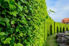 Лабиринт дерева в саде Стоковая Фотография