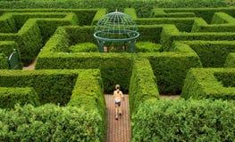 лабиринт изгороди Стоковое Фото