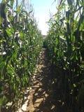 Лабиринт кукурузного поля Стоковые Фотографии RF