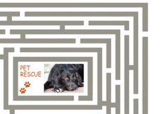 Лабиринт спасения любимчика - помогите нам найти больше домов для покинутых любимчиков Стоковая Фотография