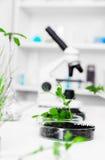 Лаборатория экологичности. Стоковое Изображение RF