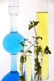 лаборатория эксперименту по биотехнологии Стоковое Фото