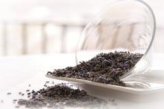 лаванда выходит чай стоковые изображения rf