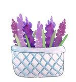 Лаванда в корзине, иллюстрация акварели бесплатная иллюстрация