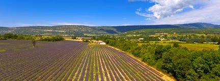 лаванда Провансаль Франции поля стоковые изображения