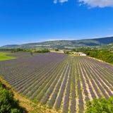 лаванда Провансаль Франции поля стоковое изображение