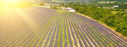 лаванда Провансаль Франции поля стоковое фото