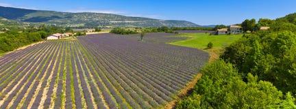 лаванда Провансаль Франции поля стоковые изображения rf