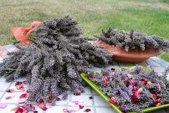 лаванда урожая Стоковая Фотография