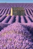 Лаванда fields в Valensole с каменным домом в свете лета Плато de Valensole, Alpes de Hautes Провансаль, f стоковые изображения rf