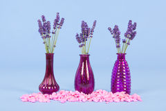 Лаванда ваз на голубой предпосылке Стоковое фото RF