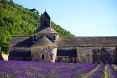 Лаванда в южной Франции Стоковая Фотография