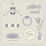 Лаванда, изолированная трава иллюстрация штока