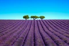 Лаванда и деревья гористые Франция Провансаль Стоковые Фото