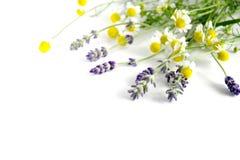 Лаванда и стоцвет стоковые изображения