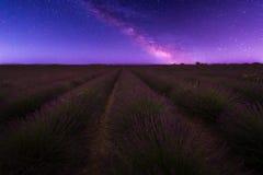 Лаванда на ноче Стоковые Фото