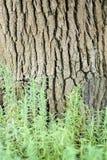Лаванда под деревом Стоковая Фотография RF