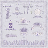 Лаванда, трава, цветок, флористический год сбора винограда, иллюстрация вектора