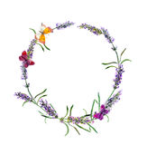 Лаванда цветет венок, бабочки акварель Стоковое Изображение