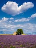 Лаванда fields в сердце Valensole, южной Франции Стоковые Изображения