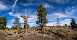 Лавовый поток национального монумента вулкана кратера захода солнца Стоковые Фото