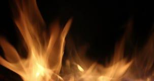 Лагерный костер в ночи Гореть входит в систему оранжевые пламена закрывает вверх Предпосылка огня Красивые ожога огня ярко видеоматериал