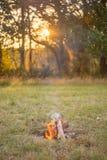 Лагерный костер на заходе солнца Стоковое Изображение RF