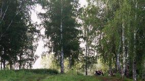Лагерь в лесе видеоматериал
