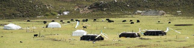 Лагерь кочевников Amdo Стоковая Фотография