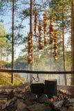 Лагерь подборщика гриба Стоковые Фото
