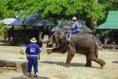 Лагерь слона Maesa, Чиангмай, Таиланд Стоковое Фото