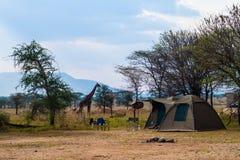 Лагерь шатра в сафари Стоковое Фото