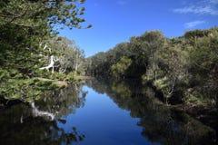Лагуна Австралия угорь стоковые фотографии rf