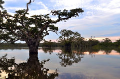 Лагуна Амазонкы Стоковая Фотография RF