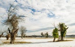 Лагуна Венеции в зиме Стоковые Изображения