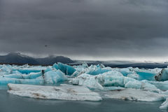 Лагуна ледника Jokulsarlon в Исландии над океаном летания птицы темным раскройте крыла чайки стоковое фото rf
