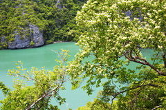 Лагуна и вода зеленого цвета конспекта залива Kho Дао Стоковые Фотографии RF