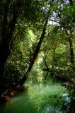лагуна тропическая Стоковое Фото