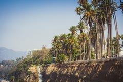 Ладони в парке палисадов в Санта-Моника стоковое изображение rf