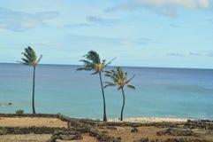 ладони Гавайских островов Стоковое Фото