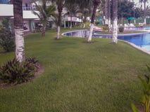 Ладони и деревья в плоском курорте Бразилии стоковая фотография rf