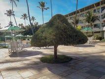Ладони и деревья в плоском курорте Бразилии стоковая фотография