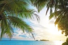 Ладони и красивое голубое море Стоковые Фото