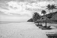 Ладони и sunbeds песка троповые Самые лучшие пляжные комплексы Kuantan Роскошные каникулы на кристалле - чистых водах и древних п стоковые фотографии rf