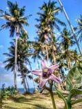 Ладони кокоса на заходе солнца стоковое изображение rf