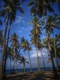 Ладони кокоса на заходе солнца стоковое изображение